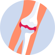 Otot, Tulang dan Sendi